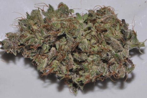 Bangi Haze Marijuana Strain