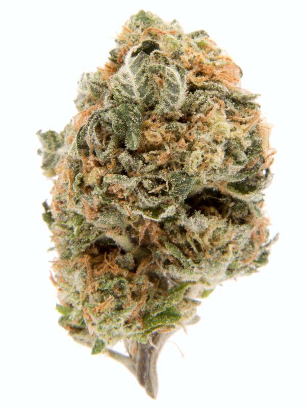Blueberry Cannabis Strain
