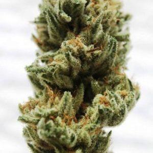 Club 69 Cannabis Strain