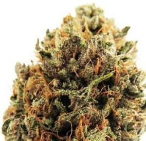 Cobbler Cannabis Strain USA