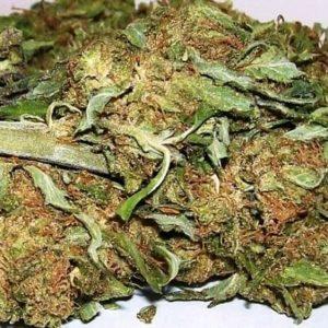 Fighting Buddha Marijuana Strain