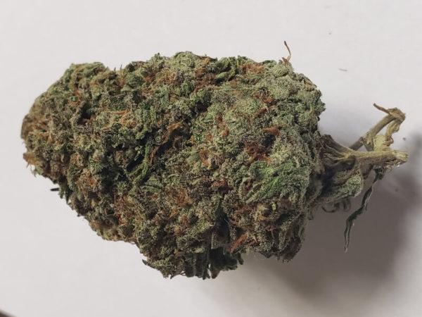Malawi Gold Marijuana Strain