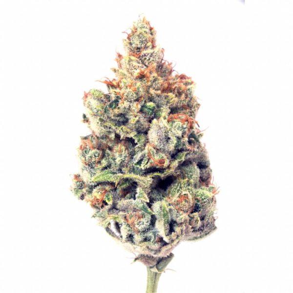 Memory Loss Cannabis Strain