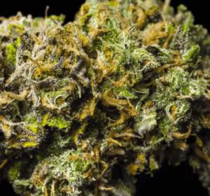 Pagoda Cannabis Strain USA