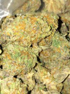 Platinum GSC Cannabis Strain
