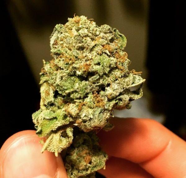 Platinum Kush Marijuana Strain