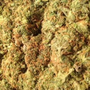 Stardawg Marijuana Strain