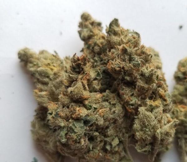 Sundae Driver Cannabis Strain