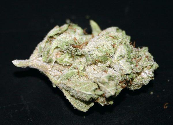 White Shark Marijuana