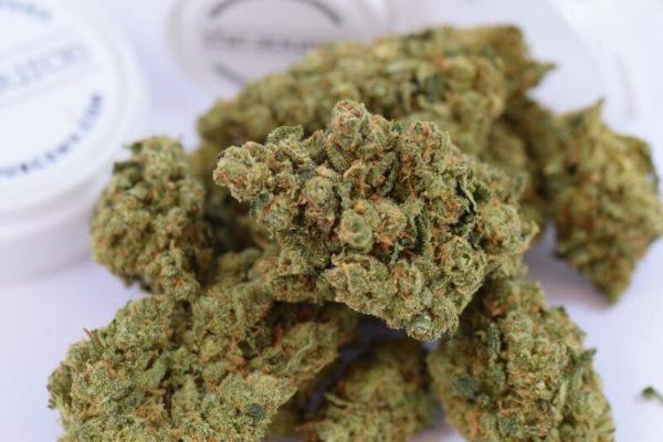 Buy XJ-13 Marijuana Strain