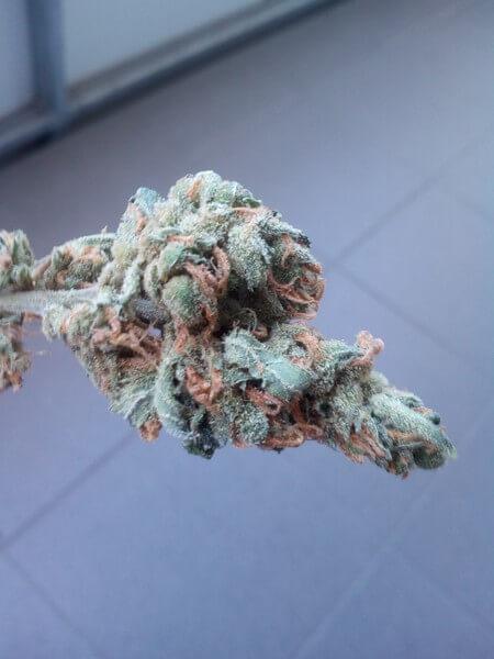 Chemnesia Weed Strain USA