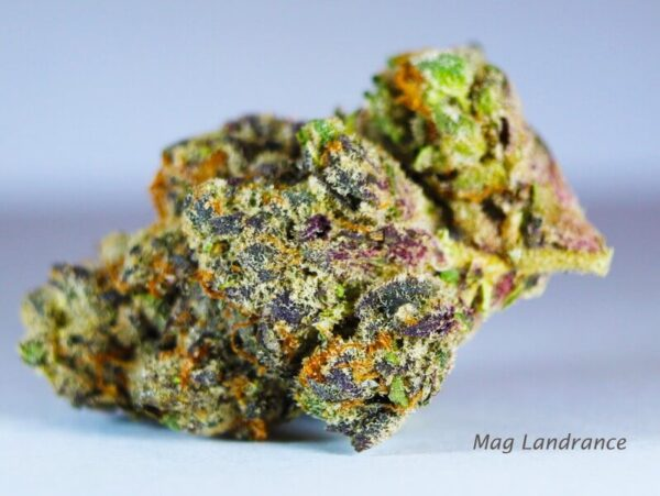 Mag Landrace Weed Strain