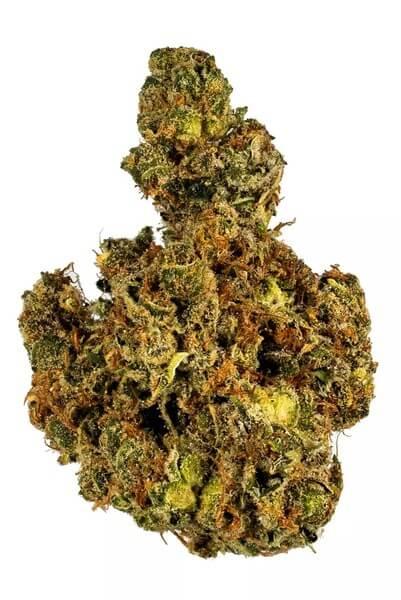Snowball Cannabis Strain USA