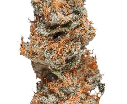 Taffie Cannabis Strain