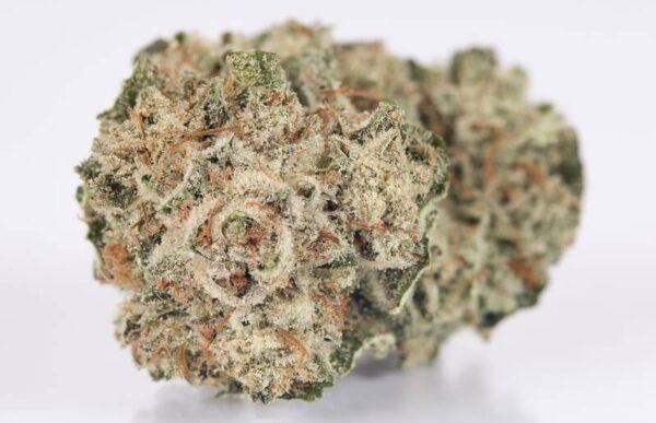 White Glue Weed Strain USA