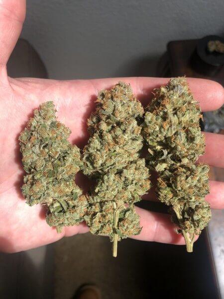 Z Cube Cannabis Strain